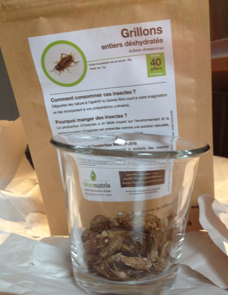 micronutris cricket entomophagy grillon