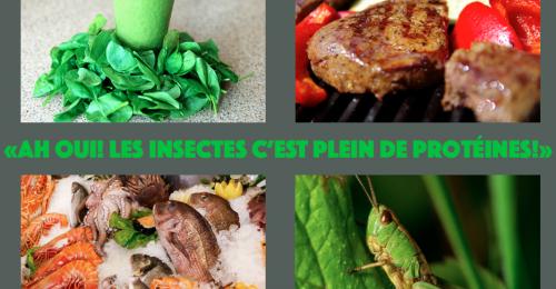 insectes protéines