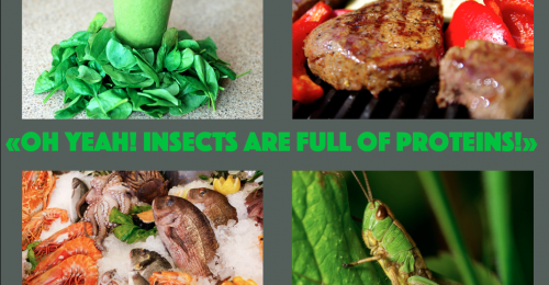 insects proteins entomophagy