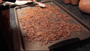 mealworm apple entomophagy edible insects