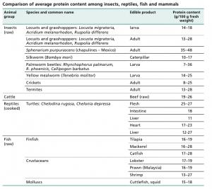 valeur protéines insectes