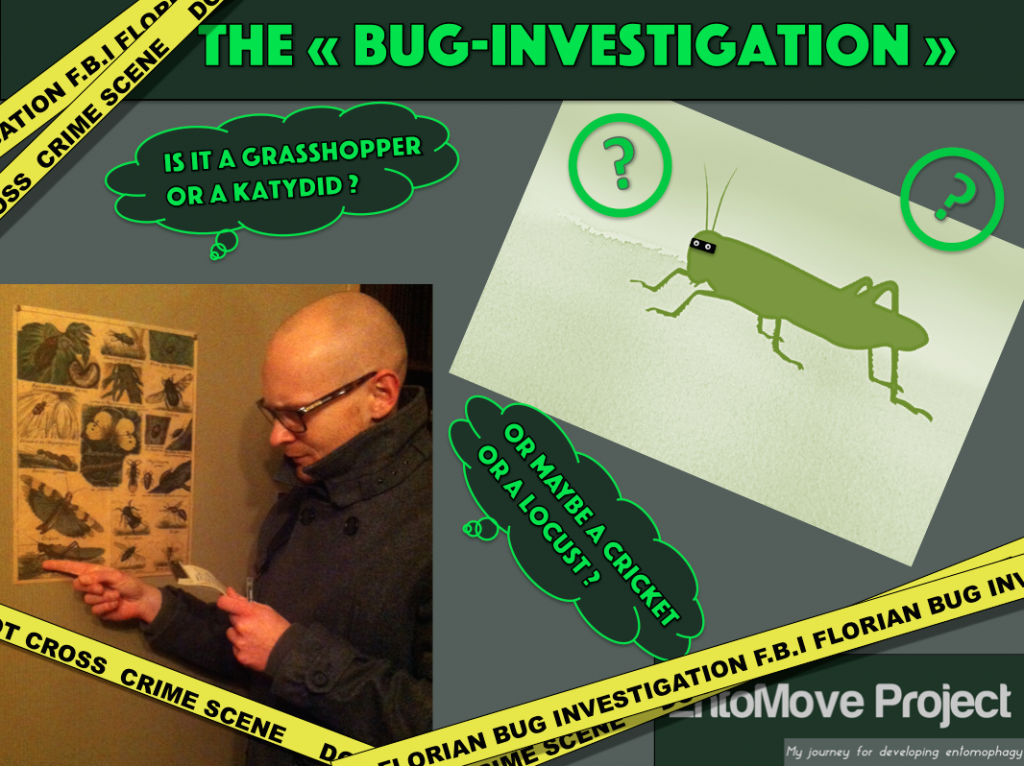bug-investigation-cover-cricket