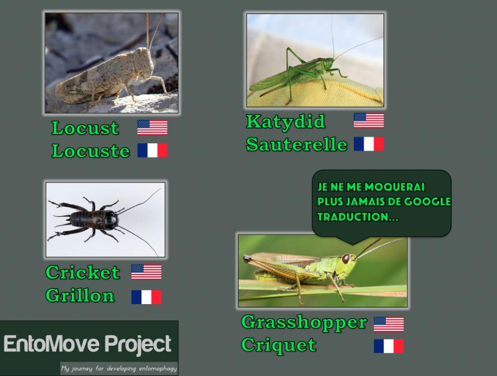 criquet grillon entomophagie papier différences