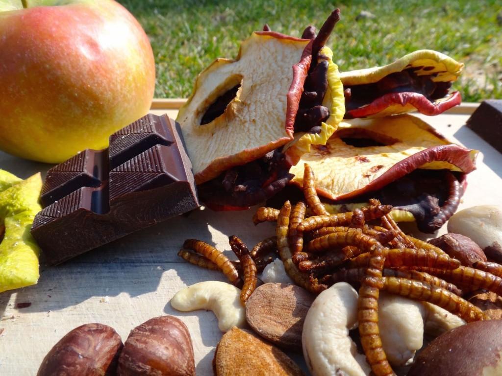 strasbourg insectes entomophagie ver de farine tenebrions chocolat pomme fitness nutrition entomoveproject