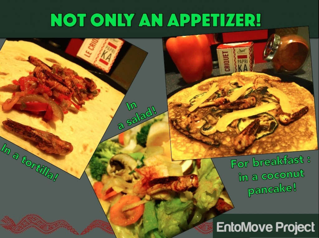 jiminis paprika recipe edible insect entomophagy entomoveproject snack