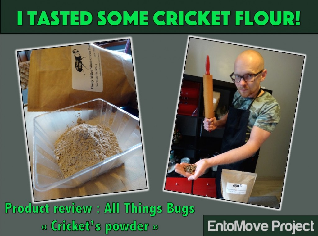 all things bugs entomoveproject cover entomophagy cricket flour paleo edibe insects recipe