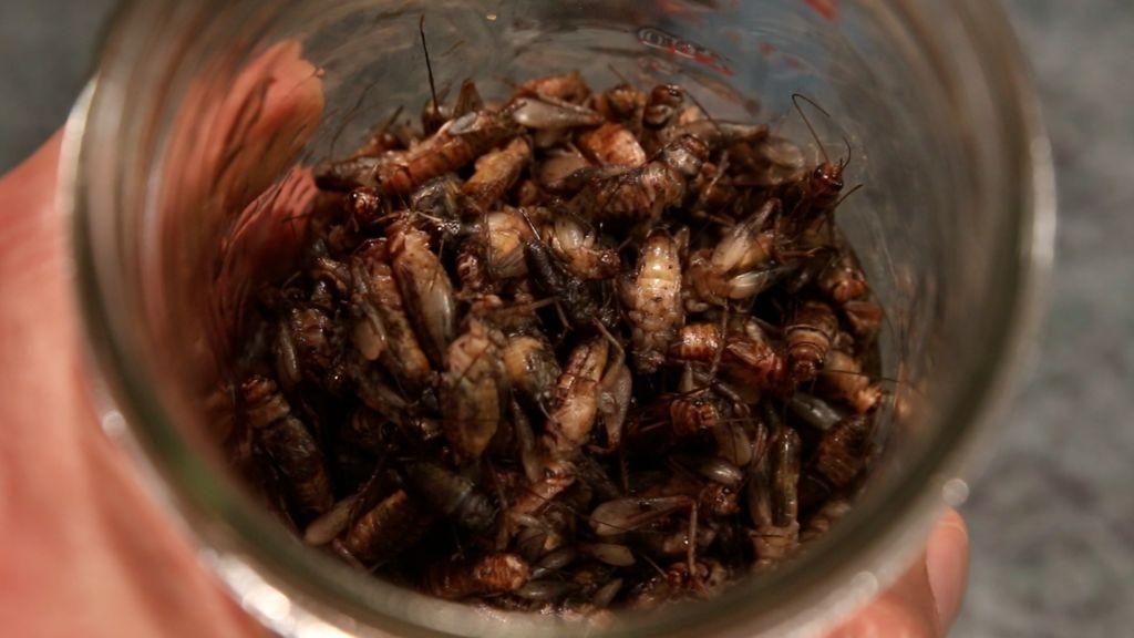 cricket nettle pesto entomophagy edible insects recipe paleo