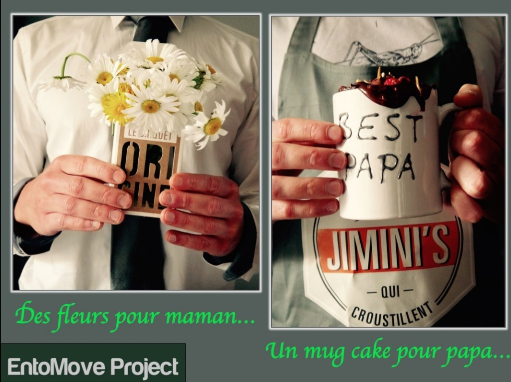 jiminis recette molitor entomove entomove project insectes comestibles chocolat dessert