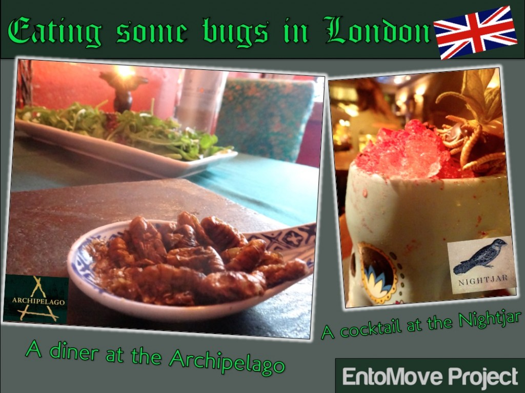 archipelago nightjar london review restaurant edible insects cricket mealworms entomophagy