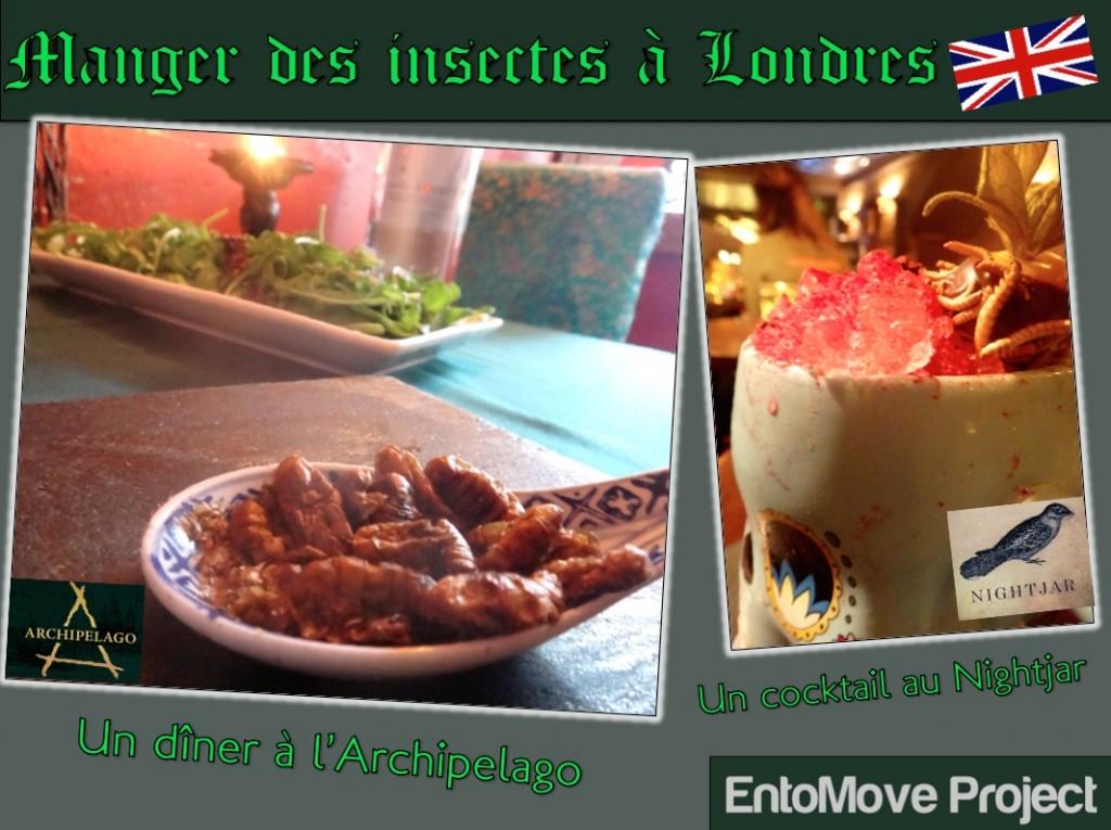 manger des insectes archipelago nightjar londres restaurant insectes comestibles entomophagie grillon ver de farine criquet