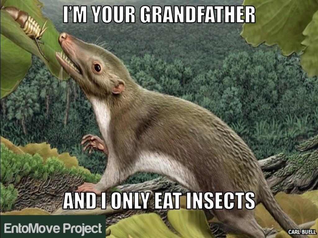 premier mammifère paléo insectes