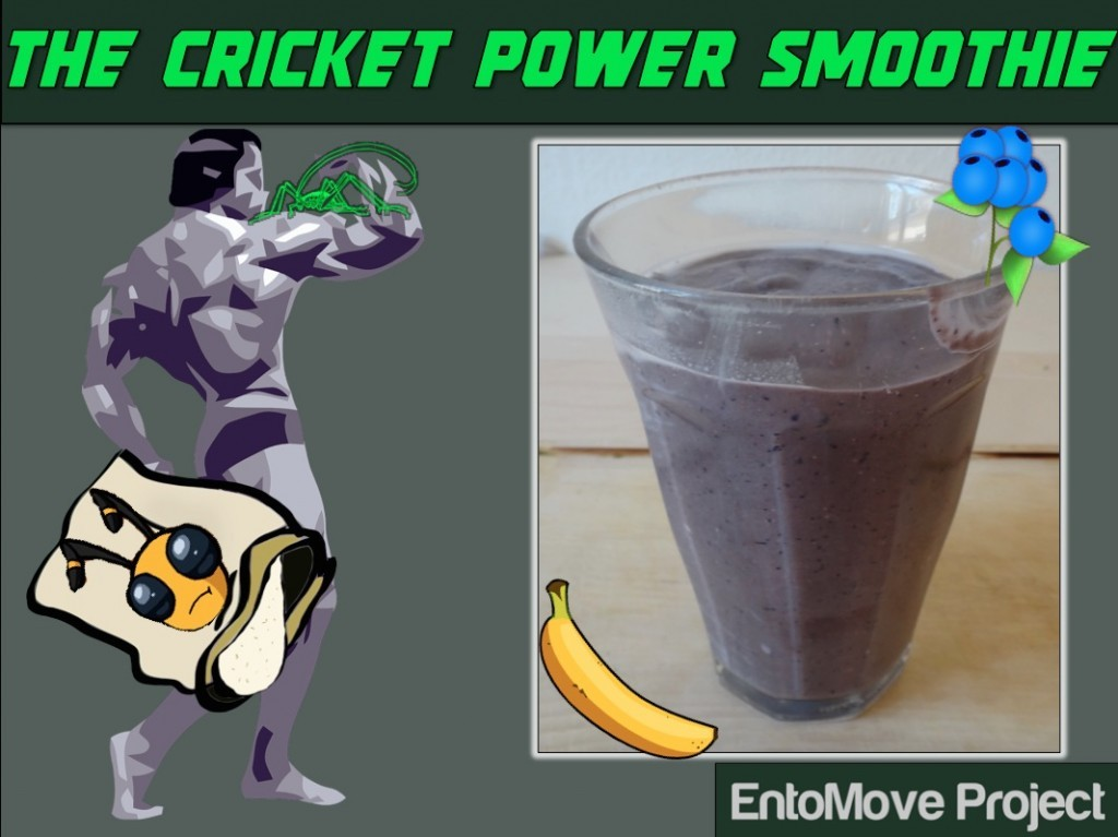 Edible insects cricket powder cricket flour fitness bodybuilding nutrition
