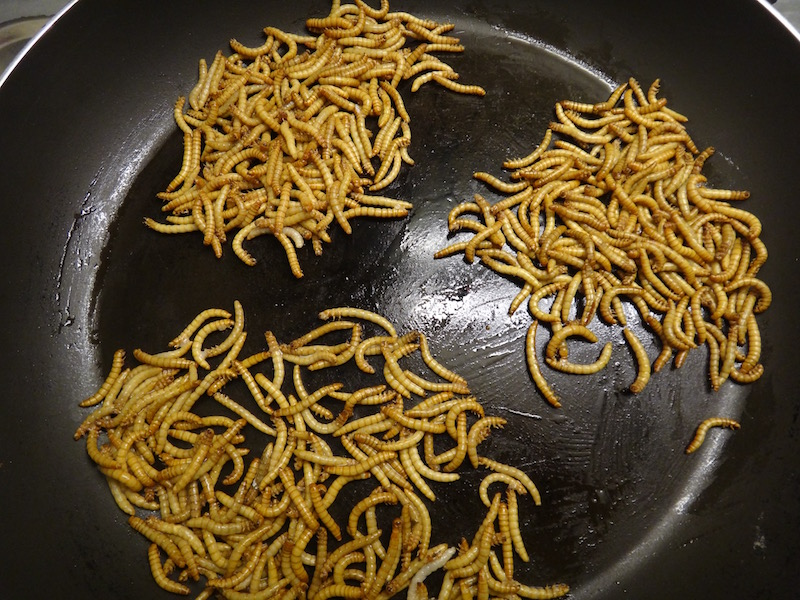 mealworms edible insects entomophagy cooking