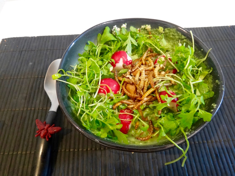 vers de farine porridge recette entomophagie insectes comestibles cover- 1