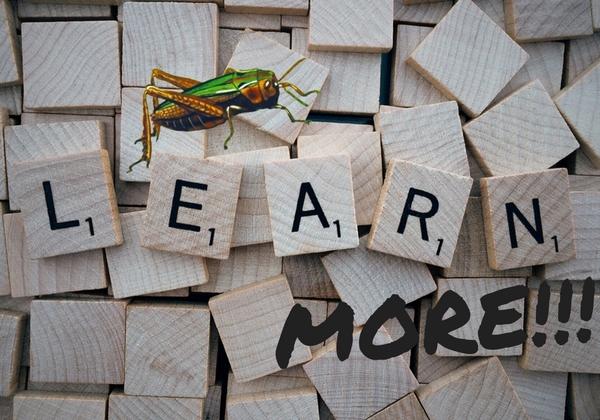Edible insects learn growth food entomophagy blog recipe cricket cricket powder