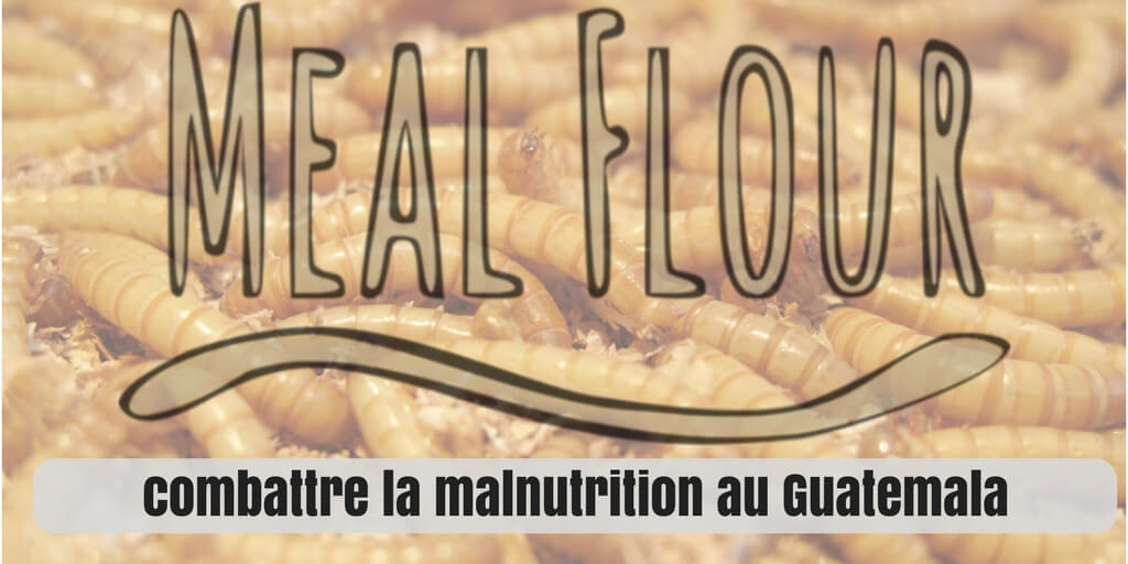 élevage d'insectes malnutrition mealflour