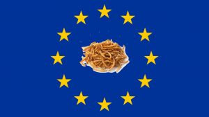 european regulation edible insects 2018
