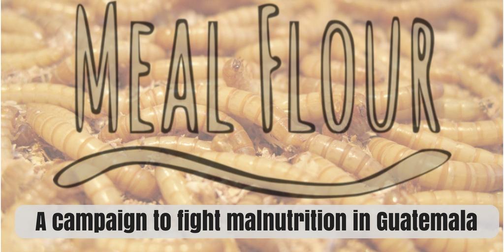 insect farming mealworm farming entomophagy