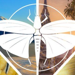 criquets migrateurs voyage insectes comestibles