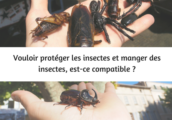 manger des insectes protéger insectes