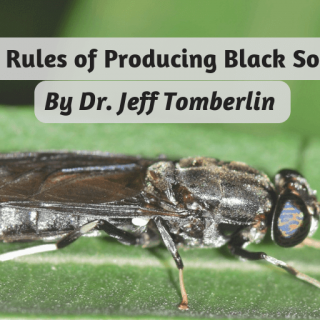 Top three rules for farming black soldier flies