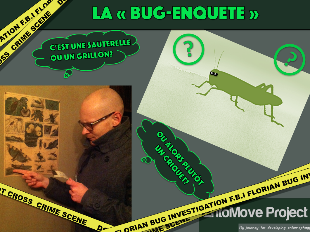 criquet grillon entomophagie