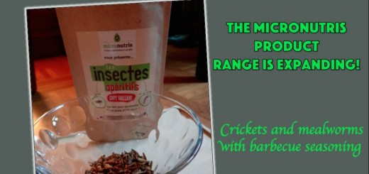 entomophagy edible insects micronutris cricket mealworms snack