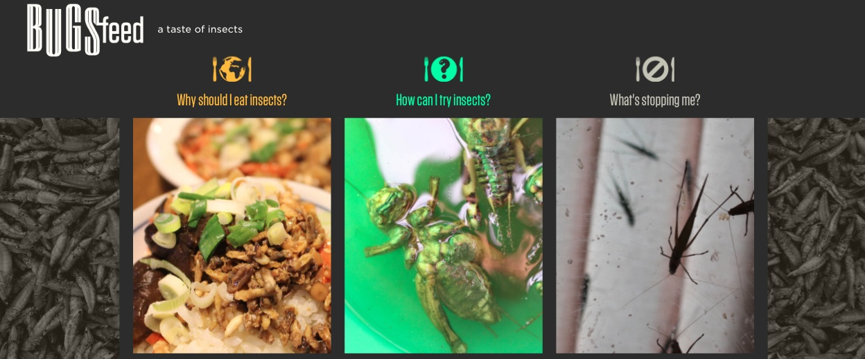 edible insects entomophagy bugsfeed