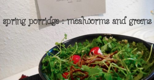 mealworms spring porridge super food cover - 1