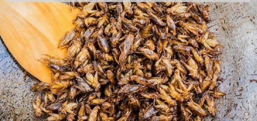Crickets taste killing processing entomophagy cricket powder