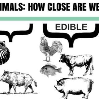 eating animals food entomophagy crickets edible insects blog